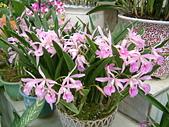 花卉:DSCF0004.JPG
