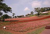大溪花海農場:IMG_2349.JPG