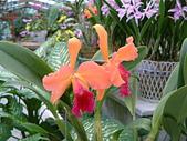 花卉:DSCF0005.JPG