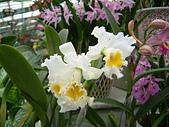 花卉:DSCF0006.JPG