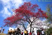 青青草原:IMG_0478