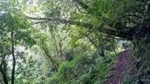 20200703『拉拉山深度3日』  神木、明池、水蜜桃 :20200705拉拉山 (8).jpg