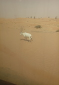 20180801Al Maha, A Luxury Collection Desert Resort:20180801 杜拜沙漠AL MAHA HOTEL (3).jpg