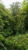 20200703『拉拉山深度3日』  神木、明池、水蜜桃 :20200705拉拉山 (31).jpg