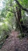 20200703『拉拉山深度3日』  神木、明池、水蜜桃 :20200705拉拉山 (9).jpg