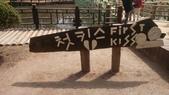 20190413南怡島:韓劇《冬季戀歌》拍攝場景:20190413南怡島 (51).jpg