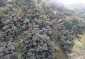 20210120北橫拉拉山原始林 檜木公路:20210119拉拉山踩線_210121_13.jpg