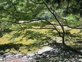 20200820拉拉山深度 神木、明池:20200820拉拉山_200902_36.jpg