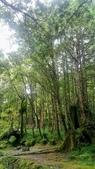 20200703『拉拉山深度3日』  神木、明池、水蜜桃 :20200705拉拉山 (129).jpg