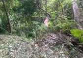 20210120北橫拉拉山 森林溪秘境 :20201029踩線團_201031_21.jpg