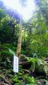 20200703『拉拉山深度3日』  神木、明池、水蜜桃 :20200705拉拉山 (124).jpg
