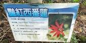 20200530東勢林場遊樂區:2020530_200530_0041.jpg