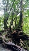 20200703『拉拉山深度3日』  神木、明池、水蜜桃 :20200705拉拉山 (6).jpg