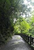 20200703『拉拉山深度3日』  神木、明池、水蜜桃 :20200705拉拉山 (32).jpg