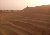 20180901杜拜驚險刺激的沙漠衝沙(Desert Safari):20180901 杜拜衝沙騎駱駝BBQ (7).jpg