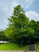 20200703『拉拉山深度3日』  神木、明池、水蜜桃 :20200705拉拉山 (71).jpg