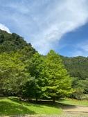 20200703『拉拉山深度3日』  神木、明池、水蜜桃 :20200705拉拉山 (79).jpg