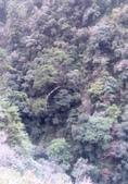 20210120北橫拉拉山原始林 檜木公路:20210119拉拉山踩線_210121_9.jpg