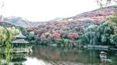 20171023山東濟南(紅葉谷景區):紅葉谷風景區 (58).jpg