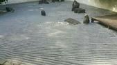 20200820拉拉山深度 神木、明池:20200820拉拉山_200902_29.jpg