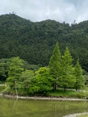 20200703『拉拉山深度3日』  神木、明池、水蜜桃 :20200705拉拉山 (46).jpg