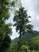 20200820拉拉山深度 神木、明池:20200820拉拉山_200902_34.jpg