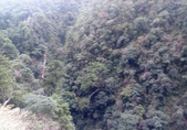 20210120北橫拉拉山原始林 檜木公路:20210119拉拉山踩線_210121_14.jpg