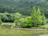 20200703『拉拉山深度3日』  神木、明池、水蜜桃 :20200705拉拉山 (47).jpg