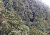 20210120北橫拉拉山原始林 檜木公路:20210119拉拉山踩線_210121_20.jpg