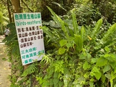 20200703『拉拉山深度3日』  神木、明池、水蜜桃 :20200705拉拉山 (53).jpg