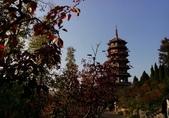20171023山東濟南(紅葉谷景區):紅葉谷風景區 (19).jpg