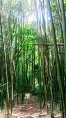 20200703『拉拉山深度3日』  神木、明池、水蜜桃 :20200705拉拉山 (121).jpg