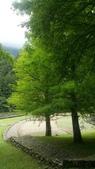 20200703『拉拉山深度3日』  神木、明池、水蜜桃 :20200705拉拉山 (143).jpg