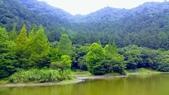 20200703『拉拉山深度3日』  神木、明池、水蜜桃 :20200705拉拉山 (147).jpg