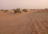 20180901杜拜驚險刺激的沙漠衝沙(Desert Safari):20180901 杜拜衝沙騎駱駝BBQ (12).jpg