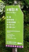 20200703『拉拉山深度3日』  神木、明池、水蜜桃 :20200705拉拉山 (4).jpg