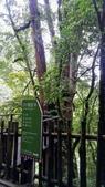 20200703『拉拉山深度3日』  神木、明池、水蜜桃 :20200705拉拉山 (5).jpg