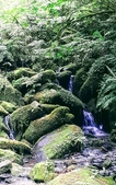 20200703『拉拉山深度3日』  神木、明池、水蜜桃 :20200705拉拉山 (28).jpg