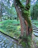 20200703『拉拉山深度3日』  神木、明池、水蜜桃 :20200705拉拉山 (69).jpg