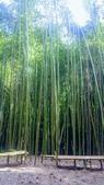 20200703『拉拉山深度3日』  神木、明池、水蜜桃 :20200705拉拉山 (123).jpg