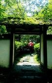 20200703『拉拉山深度3日』  神木、明池、水蜜桃 :20200705拉拉山 (136).jpg