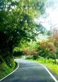 20200703『拉拉山深度3日』  神木、明池、水蜜桃 :20200705拉拉山 (140).jpg
