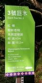20200703『拉拉山深度3日』  神木、明池、水蜜桃 :20200705拉拉山 (7).jpg