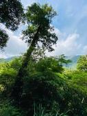 20200703『拉拉山深度3日』  神木、明池、水蜜桃 :20200705拉拉山 (104).jpg