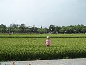 2012台灣屏東六堆客家文化園區:六堆客家園區 (22).JPG