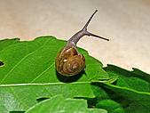 螢火蟲(台灣窗螢)的世界-壽豐雲山水自然生態農莊:DSC05231.jpg