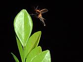 螢火蟲(台灣窗螢)的世界-壽豐雲山水自然生態農莊:DSC05284.jpg