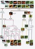 螢火蟲(台灣窗螢)的世界-壽豐雲山水自然生態農莊:guide_1.jpg