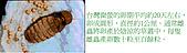 螢火蟲(台灣窗螢)的世界-壽豐雲山水自然生態農莊:螢火蟲的世界-01.jpg