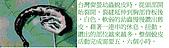 螢火蟲(台灣窗螢)的世界-壽豐雲山水自然生態農莊:螢火蟲的世界-03.jpg